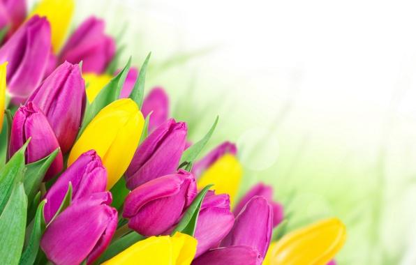 С Международным женским днём – 8 марта!